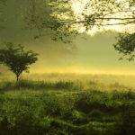 Green Kährs, czyli ekologiczne podejście do produkcji podłóg